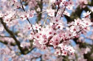 printemps-269974