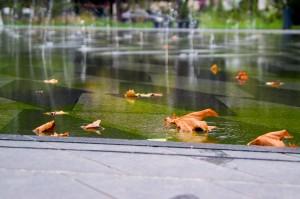 mirroir-d-eau-nantes-automne-feuille